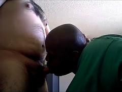 sucking bear